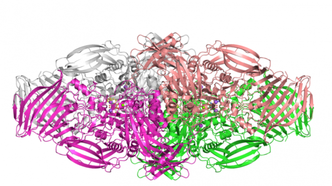 Visualization of the structure of beta-galactosidase from the EMPIAR database